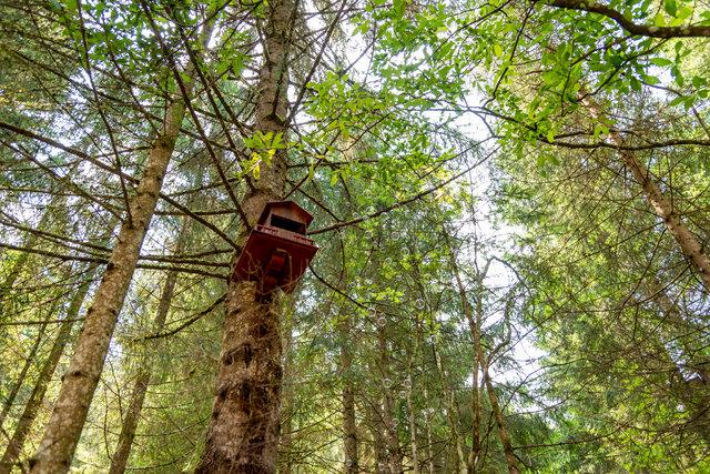 casetta degli gnomi e magia sugli alberi